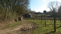 Sedlescombe Vineyard
